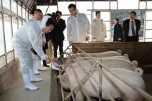 株式会社幻霜ファームの豚舎を視察。パン工場から出るパ…